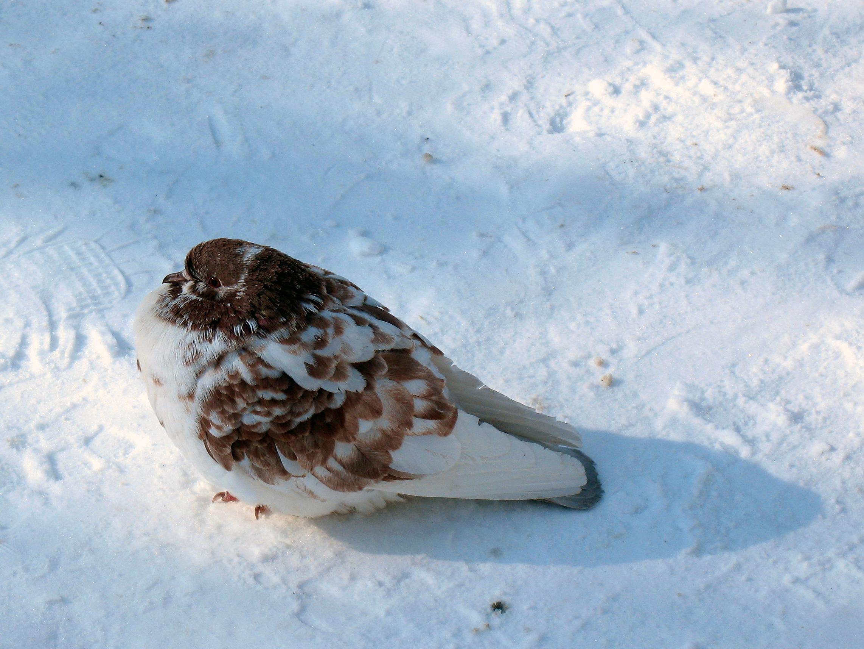 США: новая гипотеза тайны перелетных птиц