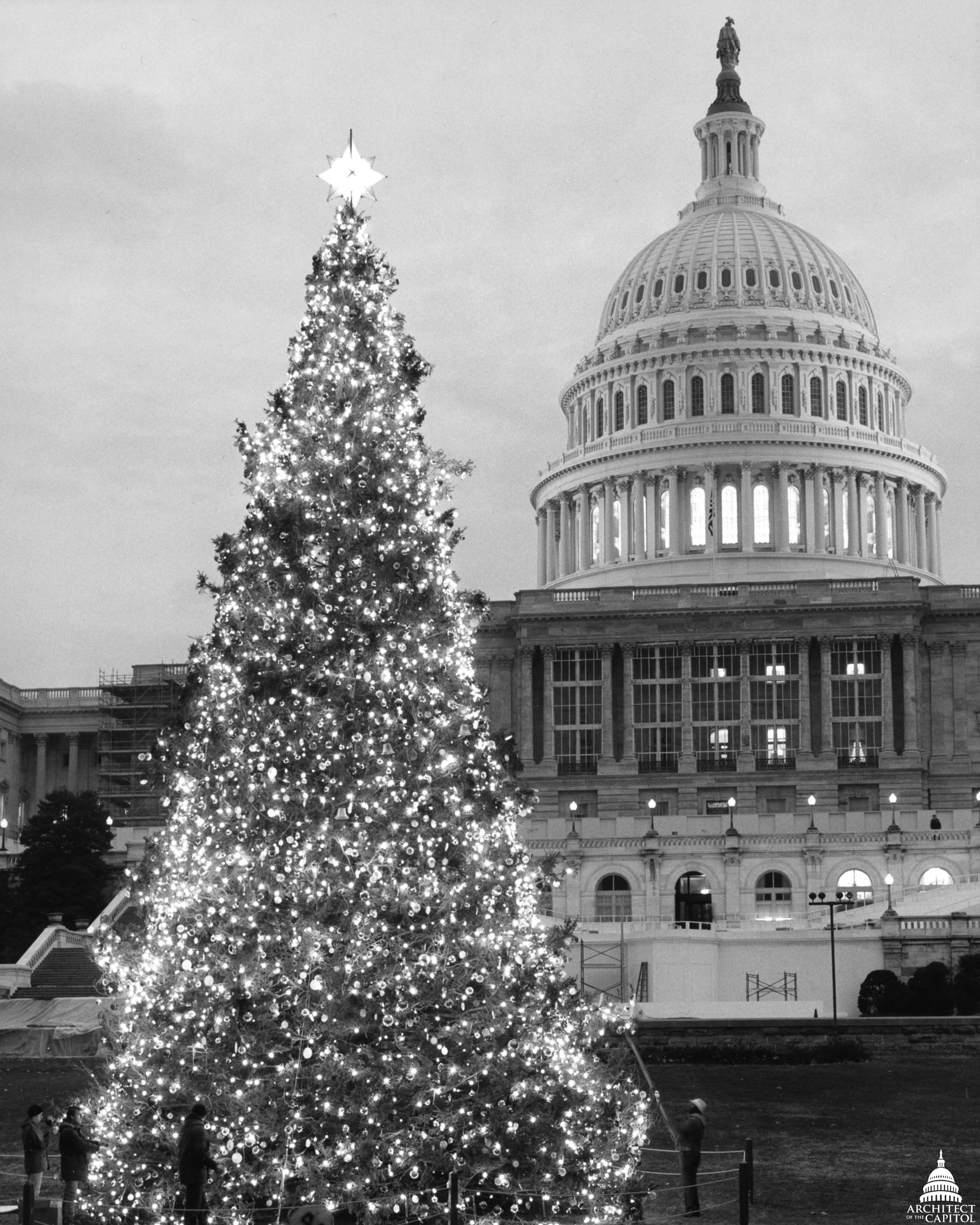 file1984 us capitol christmas tree 31805189245jpg