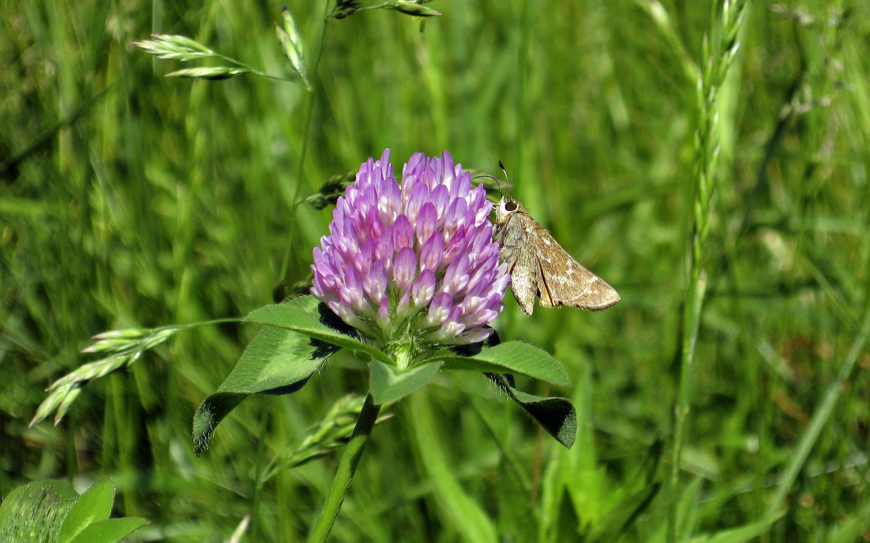 File A Butterfly on a flower Wikimedia mons