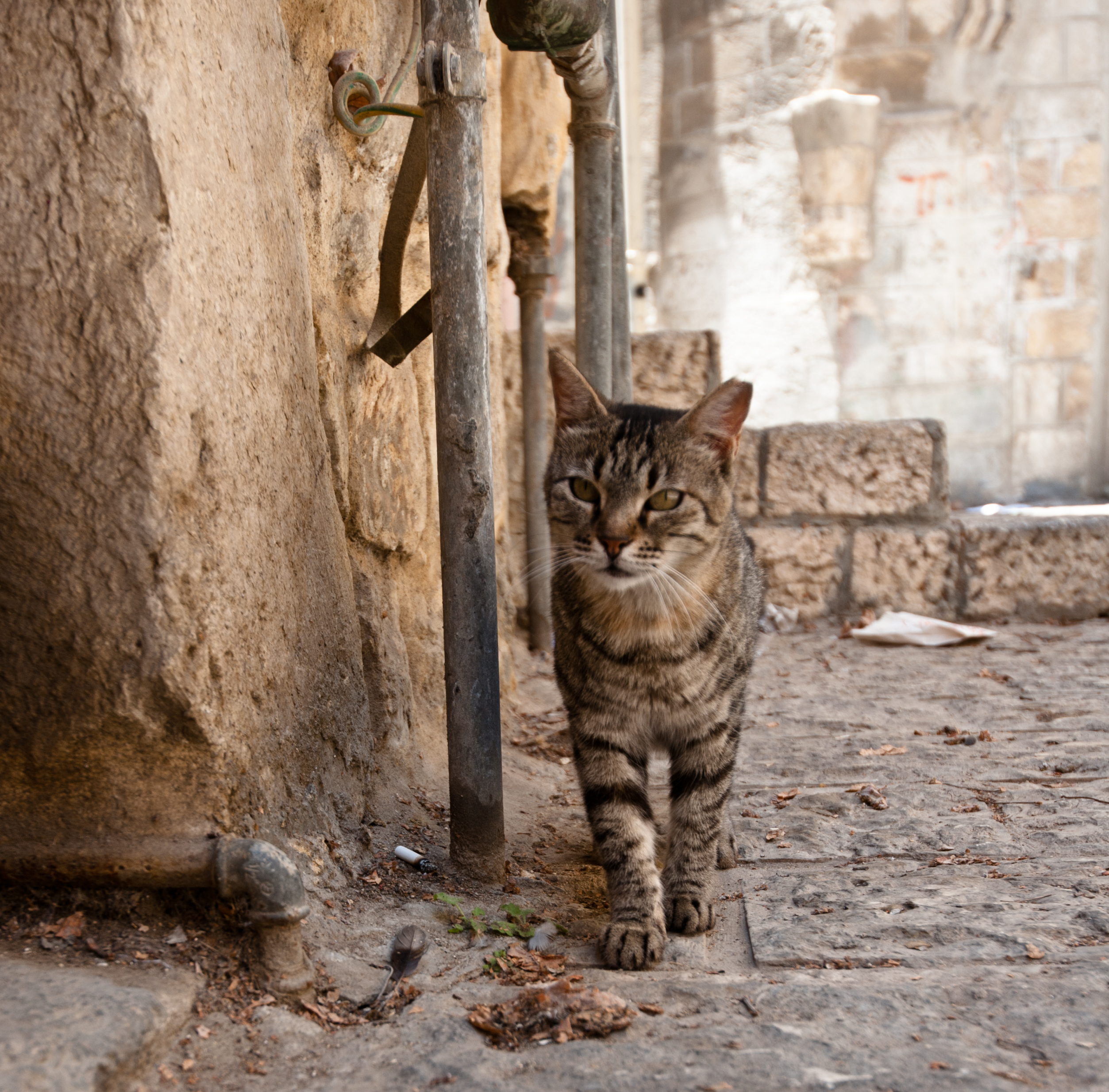 Alley Cat Cat Food Causing Health Problems