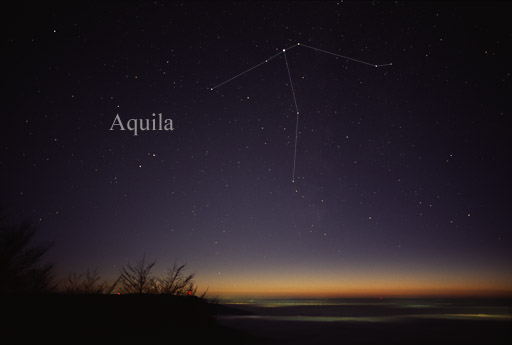 Image result for constellation aquila