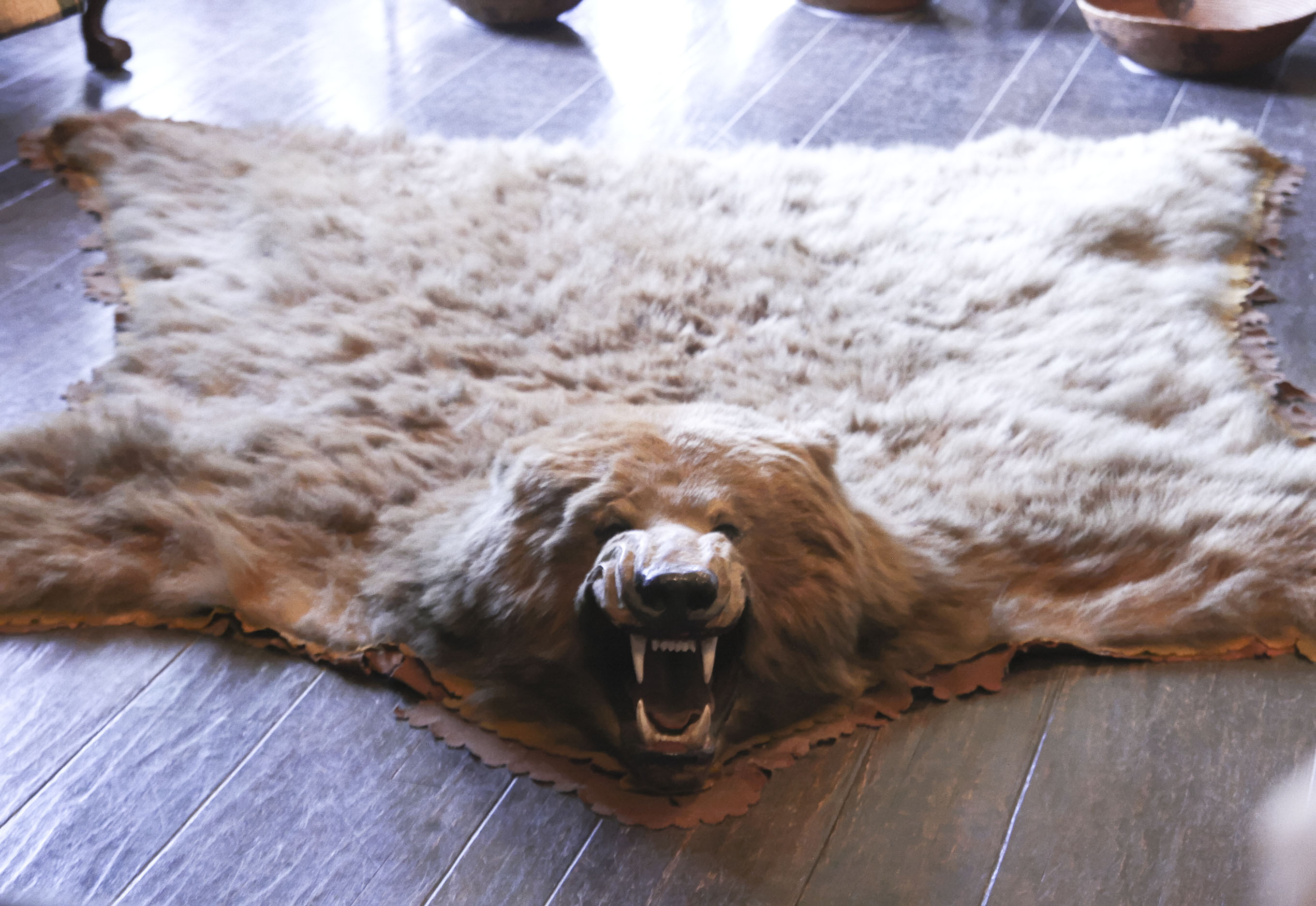 bear skin rug file bearskin rug jpg wikimedia commons 31186