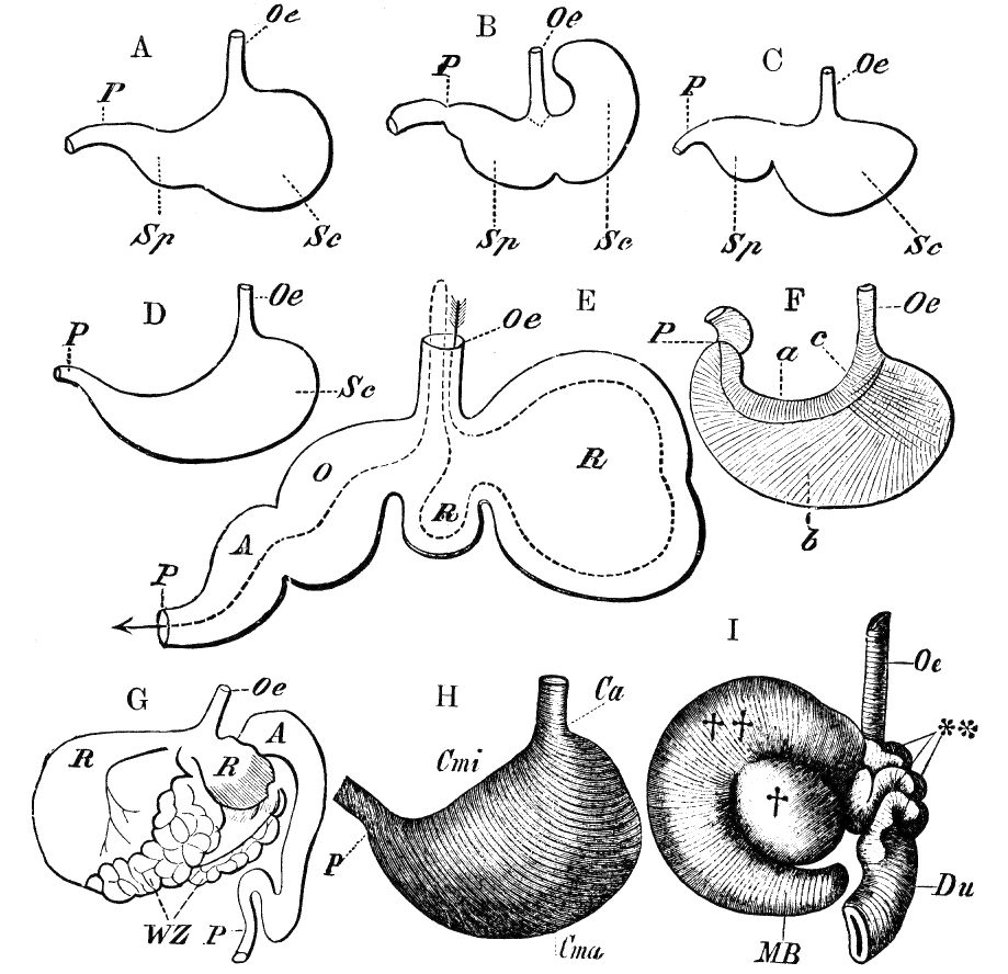 File:Cambridge Natural History Mammalia Fig 041.png - Wikimedia Commons