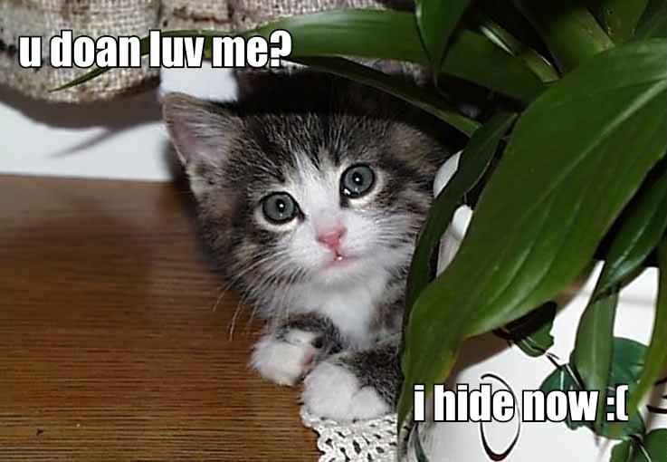 Funny Cat Adoption Video