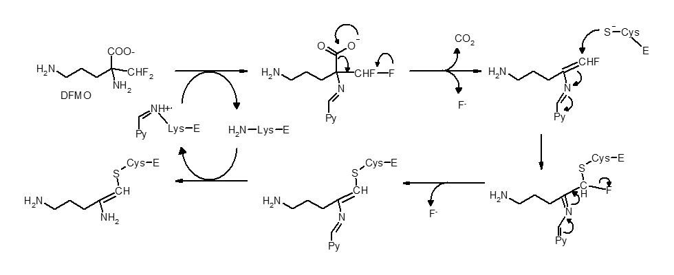 Example of a reversible inhibitor forming an irreversible product.
