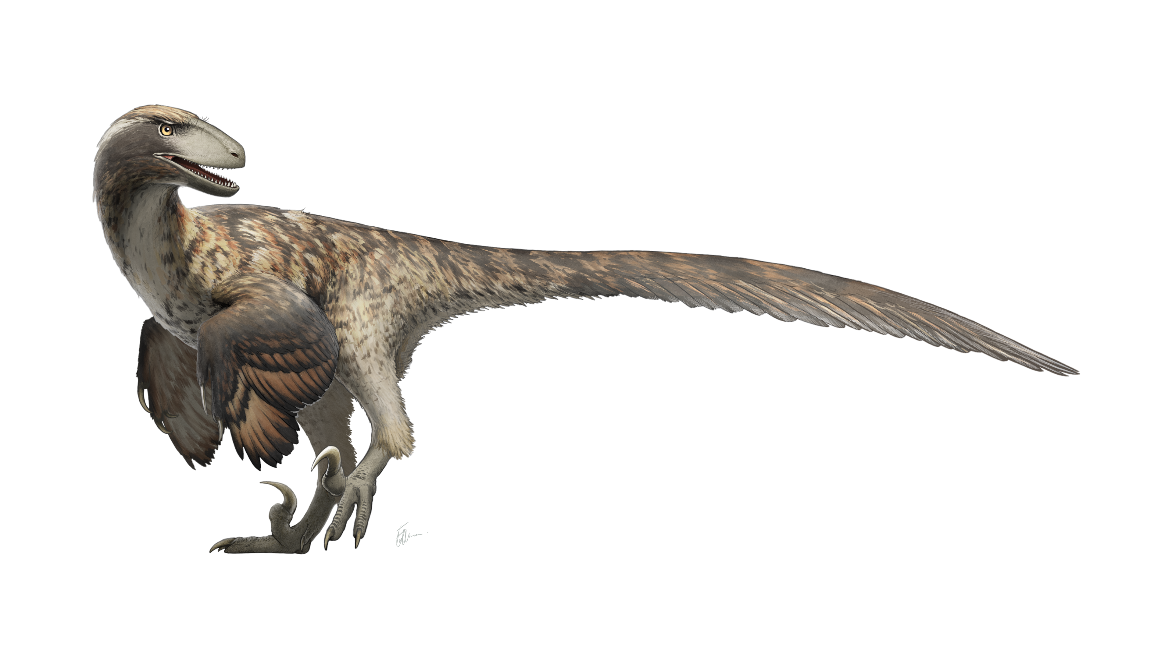 Deinonychus_Restoration.png