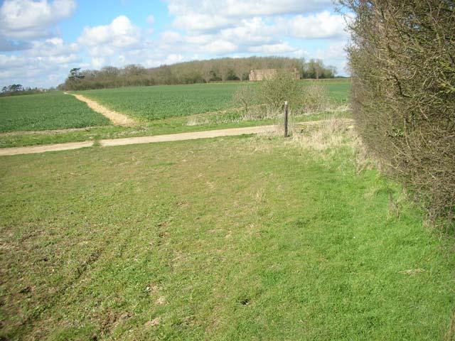 File:Denford Old Ash seen from Denford Old Covert - geograph.org.uk - 373547.jpg