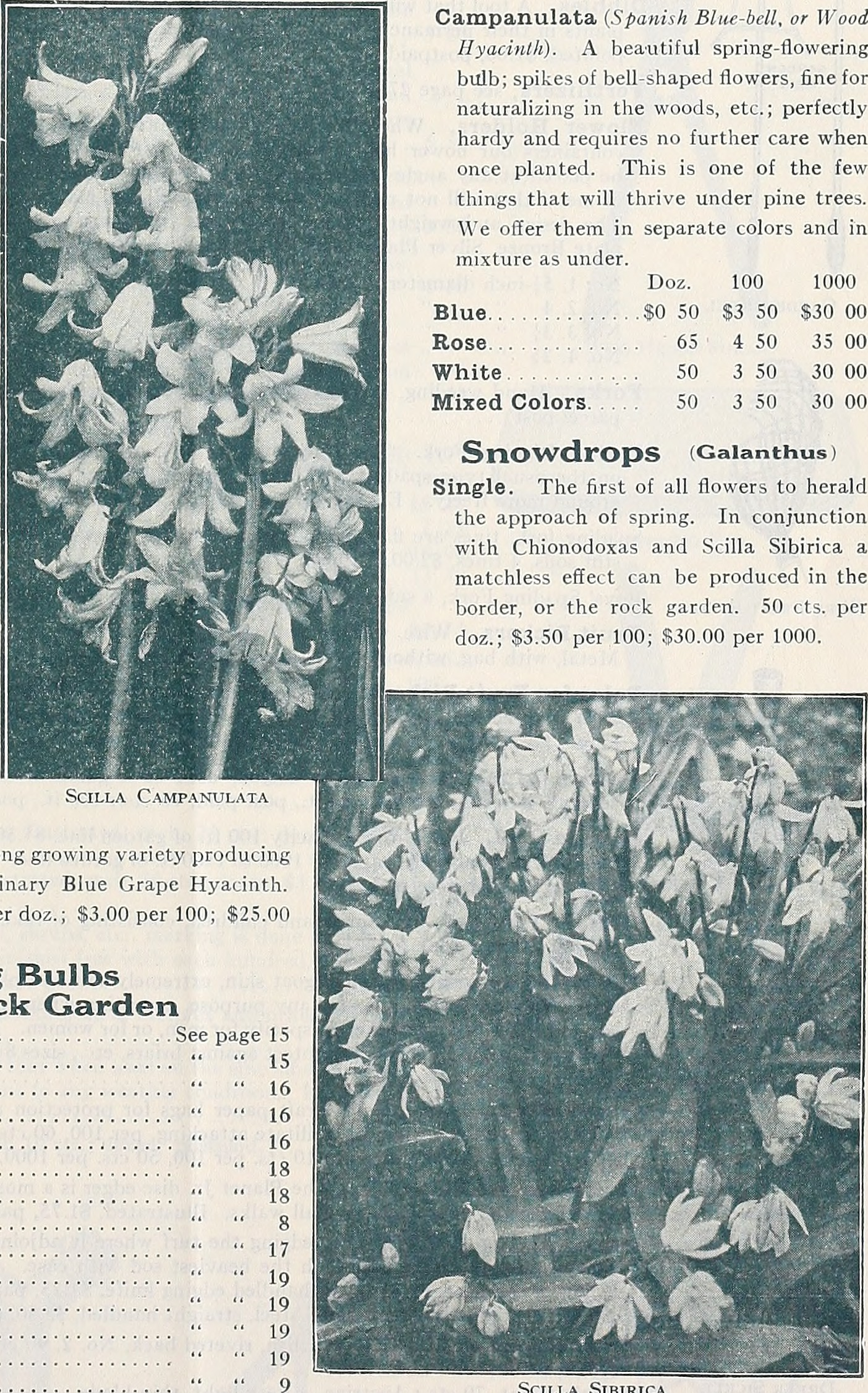 Filedreers Advance List Of Spring Flowering Bulbs 1932 1932