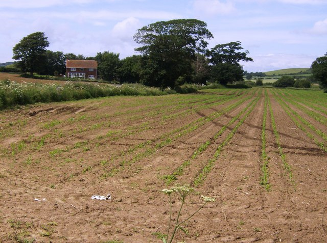 Dual cabbageways near NCN23 - geograph.org.uk - 469798