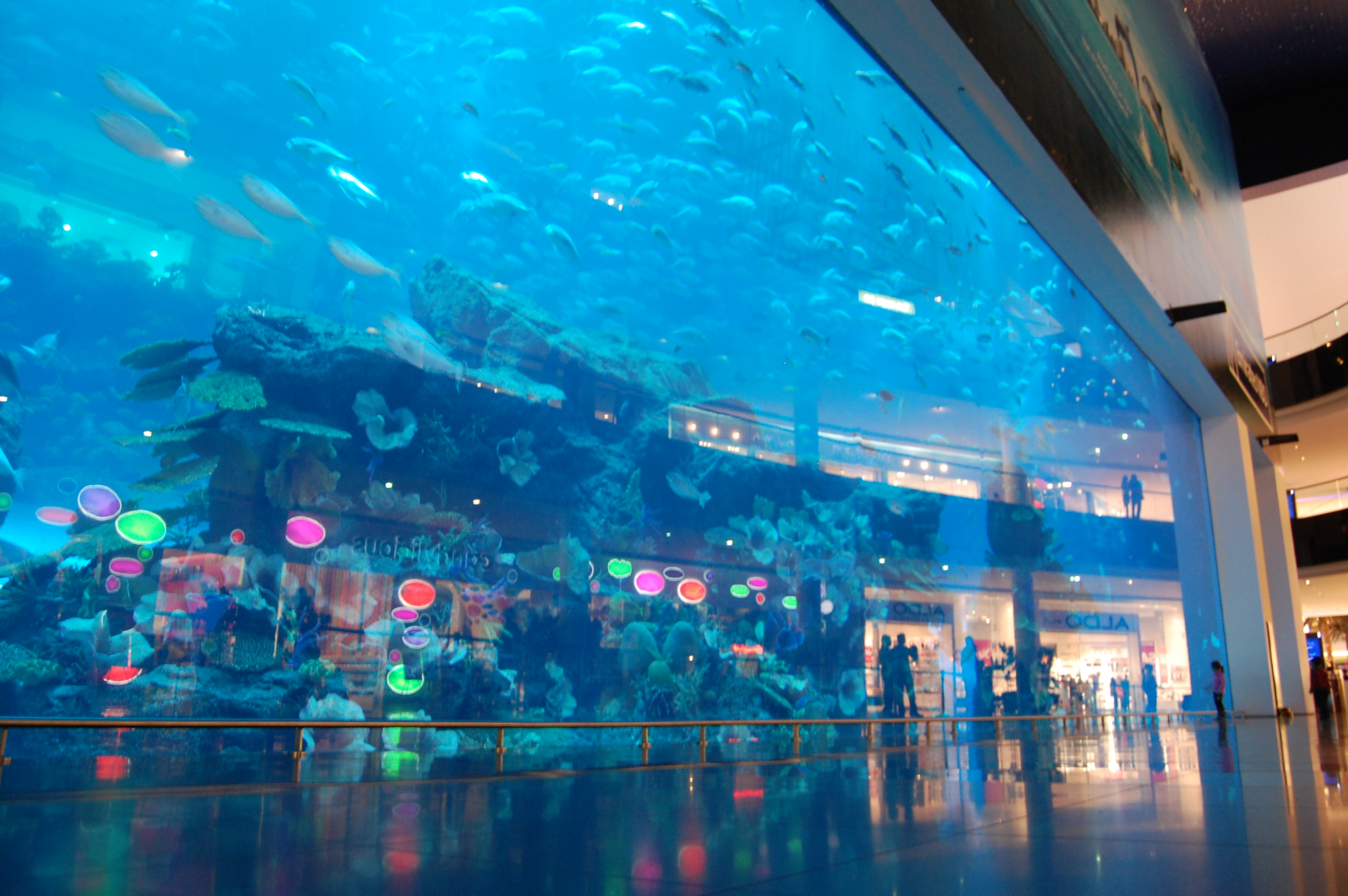 Fish aquarium in uae - The World S Biggest Fish Tank
