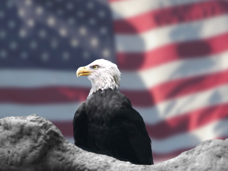 File:Eagle and American Flag by Bubbels.jpg