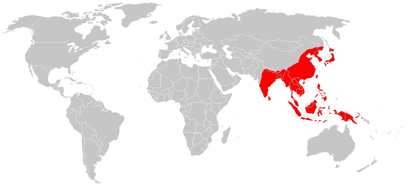 File:Encephalites japonaise.png - Wikimedia Commons