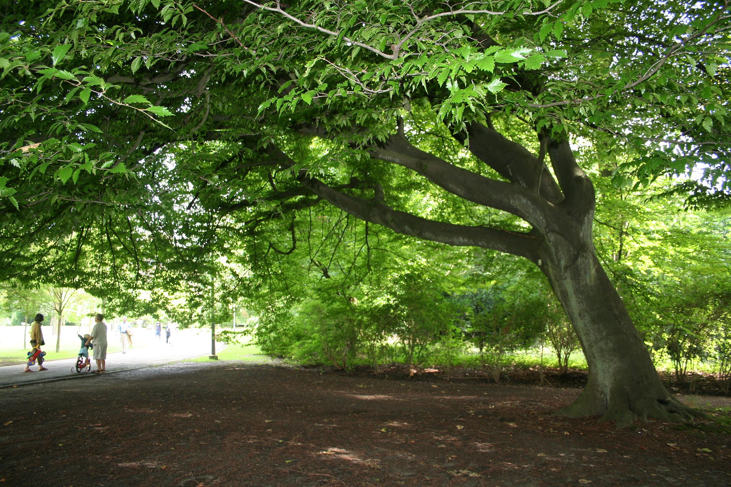Jardines arbol ltas y arbustos arboles decorativos para for Jardines con arboles y arbustos