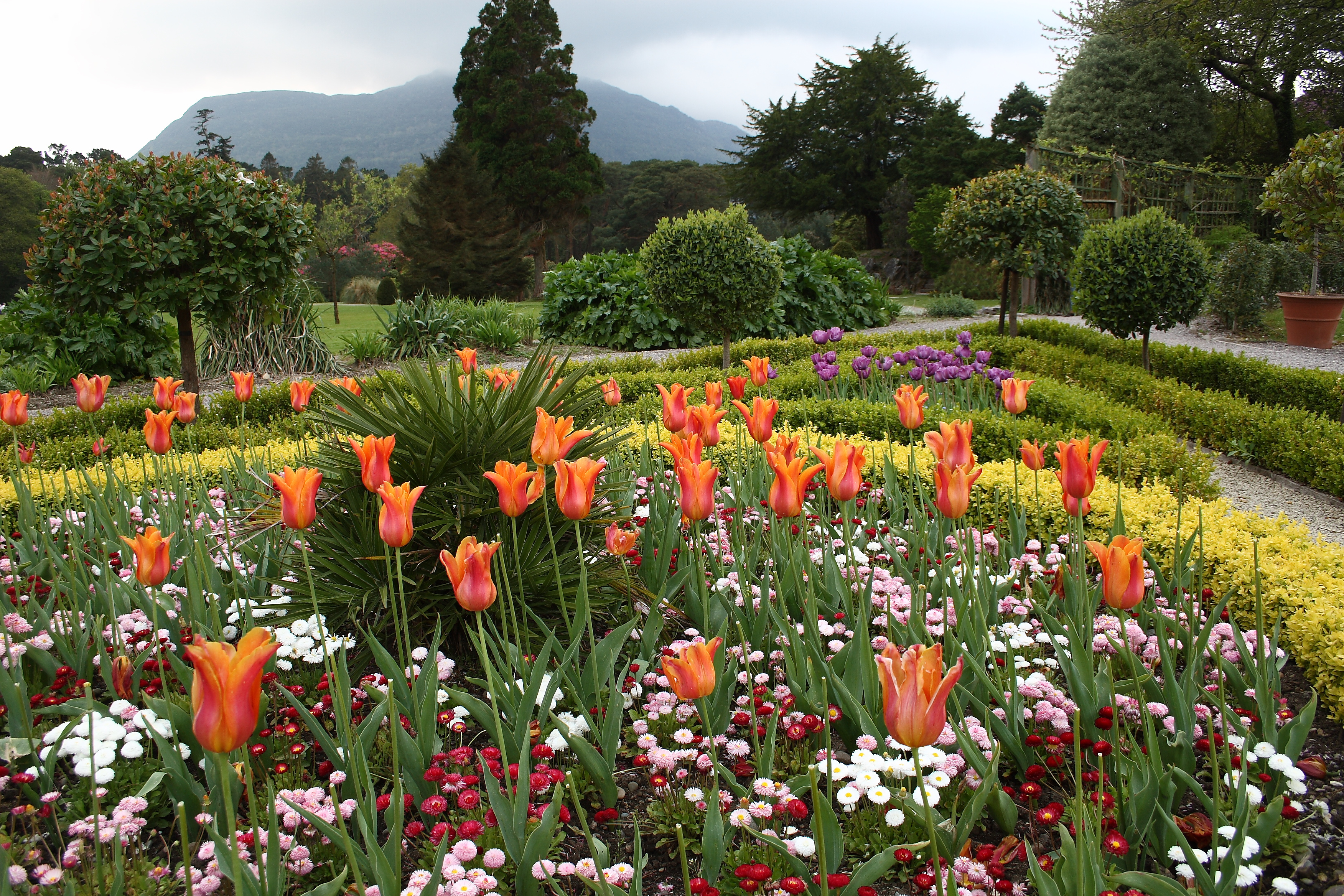 File flower garden at muckross wikipedia for Beautiful flower landscapes