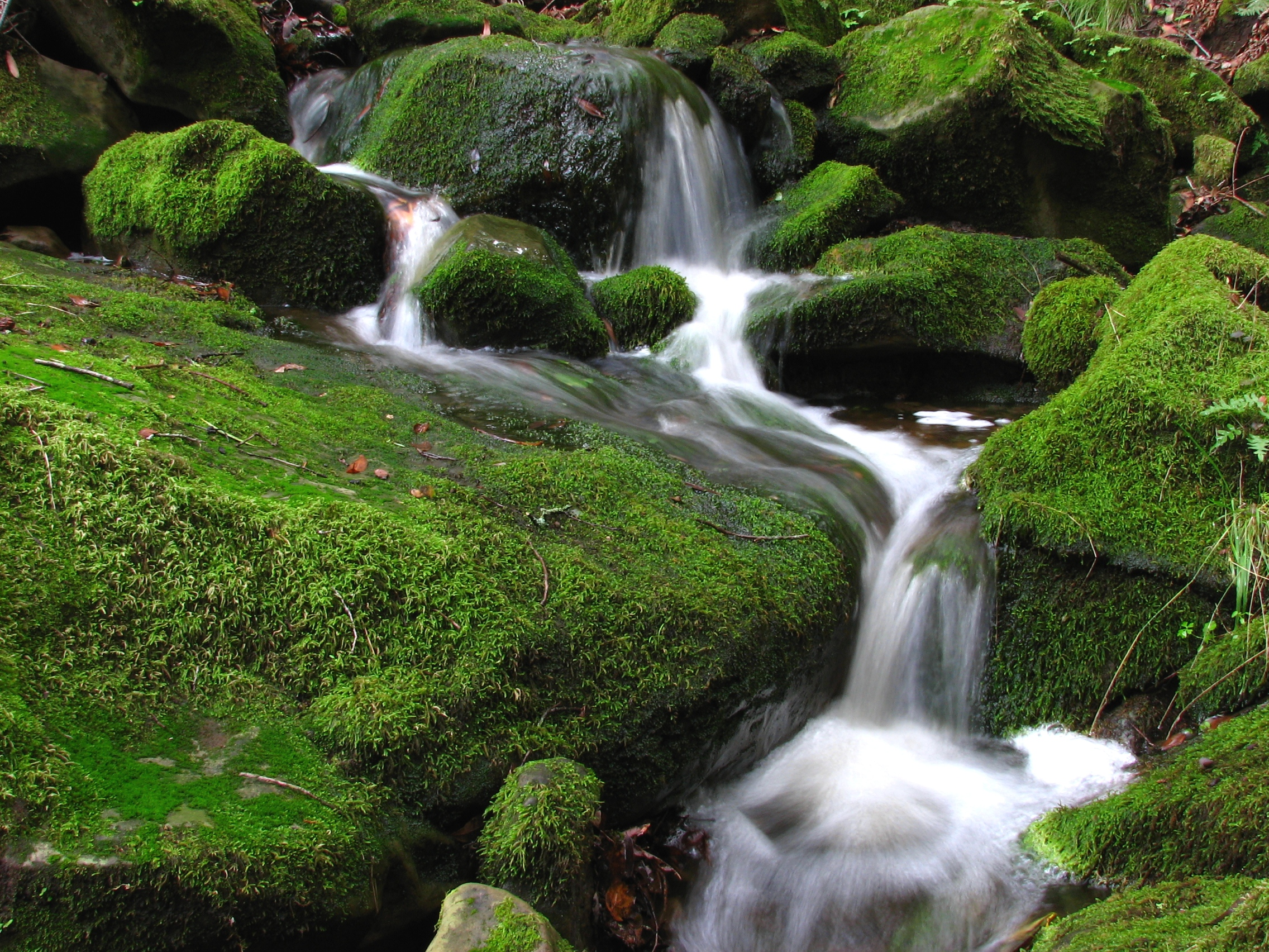 Free Nature Slideshow Screensaver
