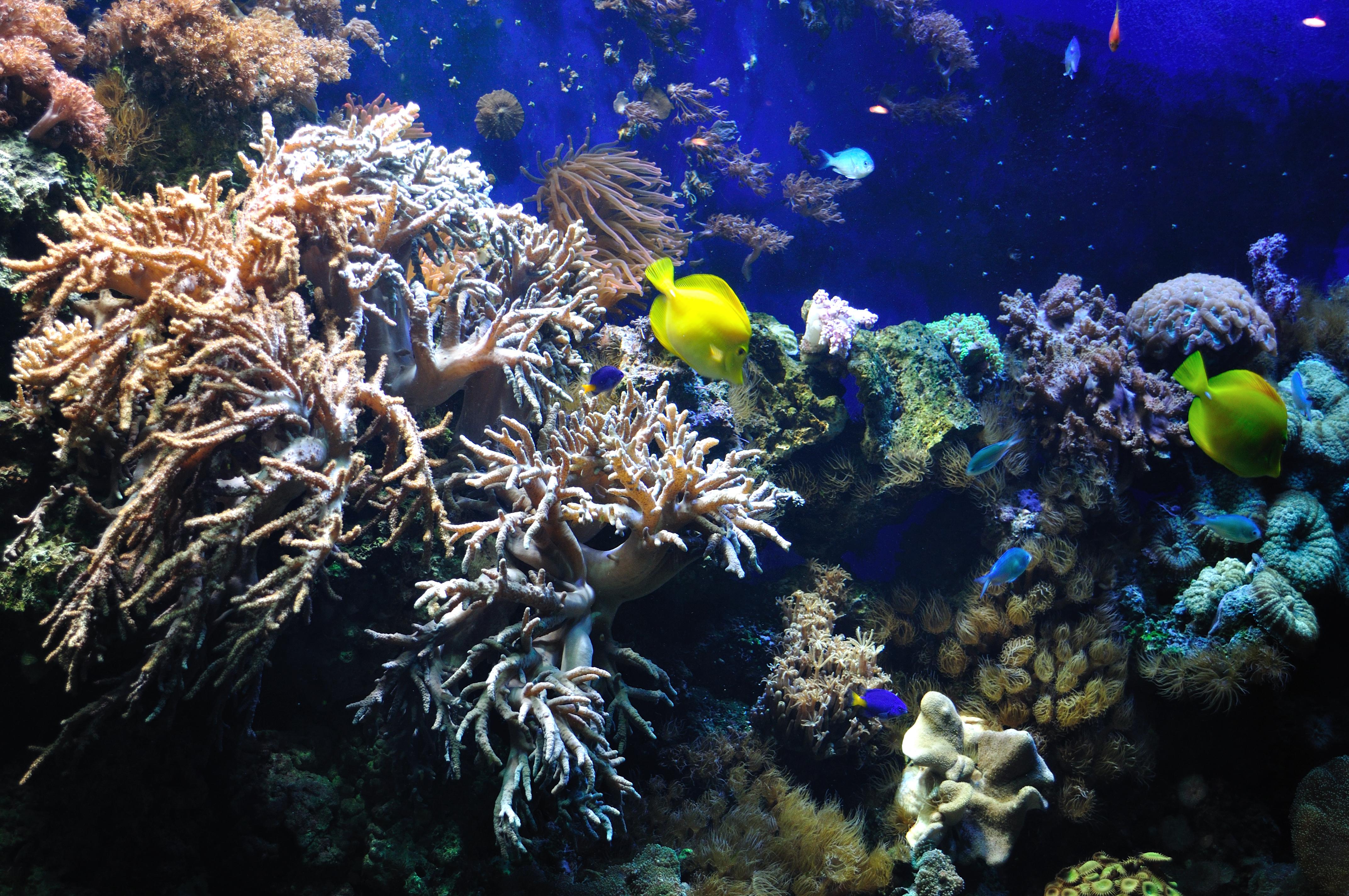 Marine Fish : File:Marine fish (5791775758).jpg - Wikimedia Commons