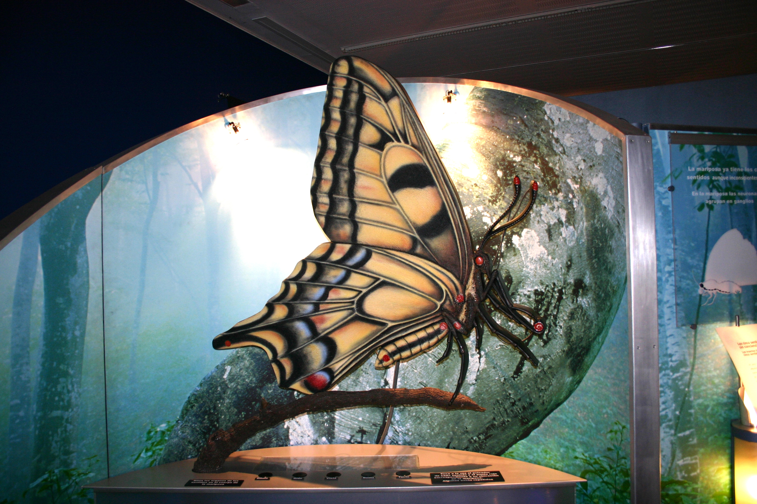Archivo Museocienciavalladolidneurona Jpg Wikipedia La
