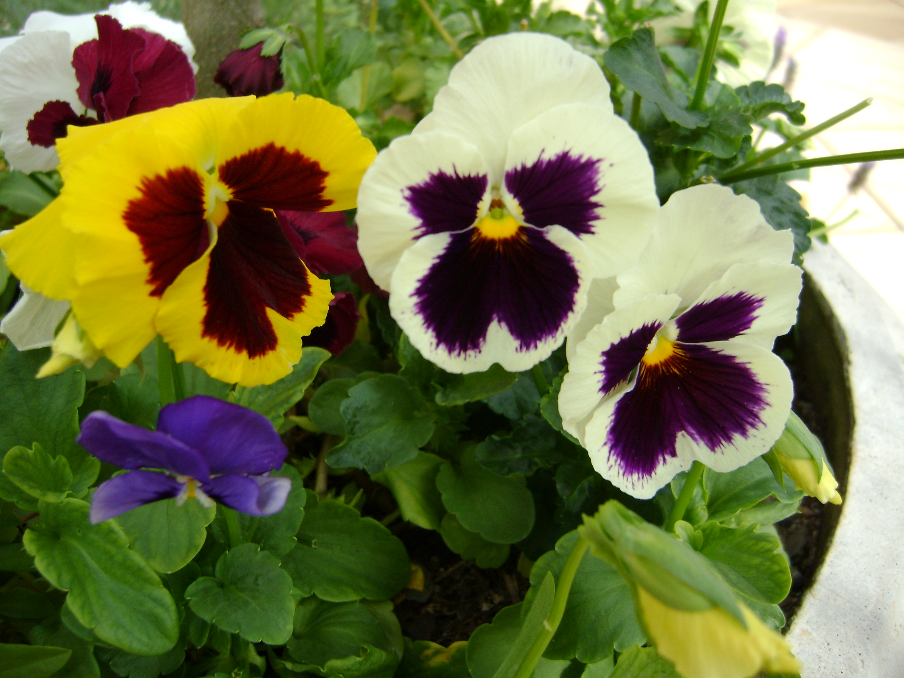 What Are The Best Flowers To Plant In Spring On Commercial Landscapes