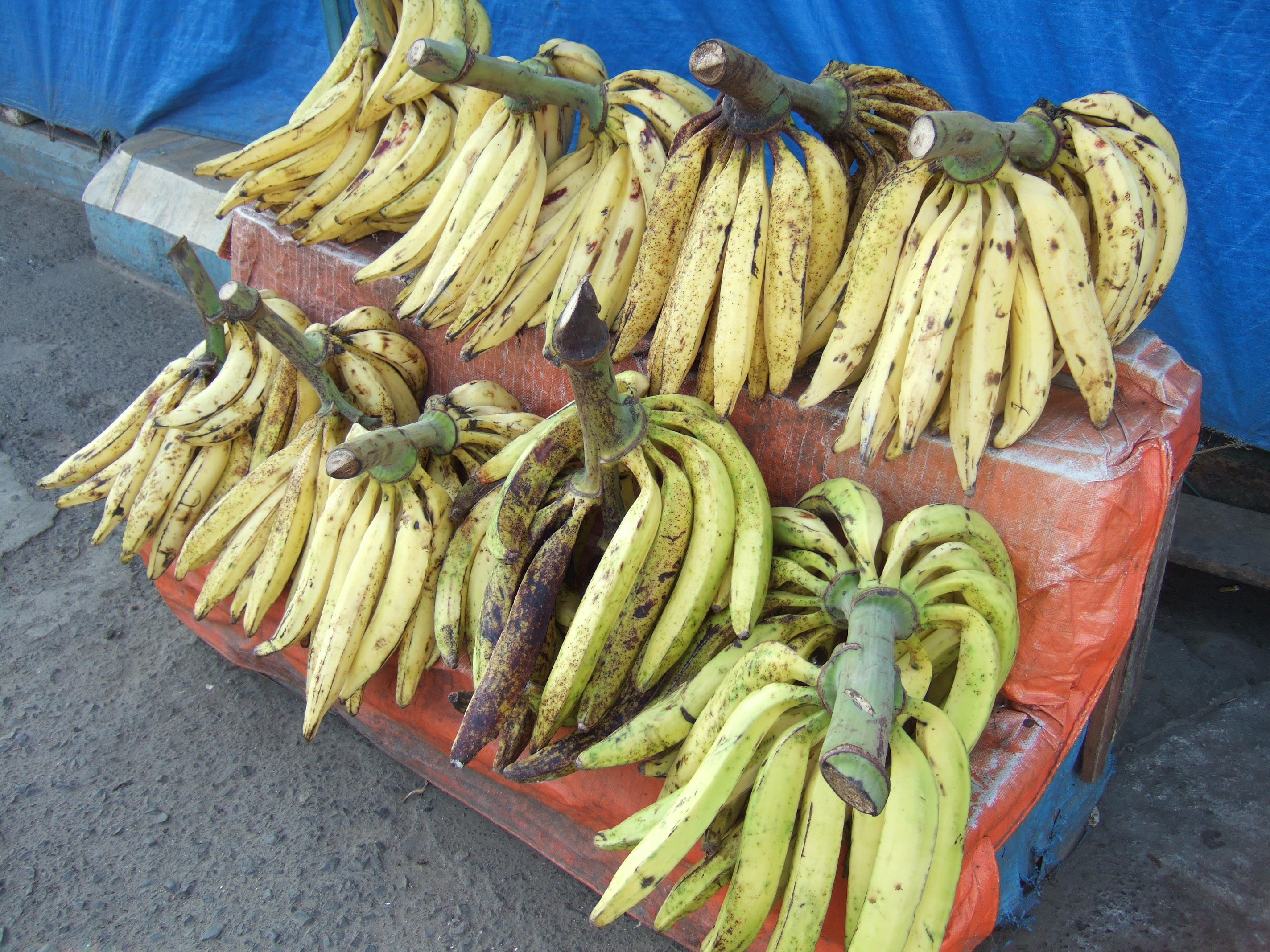 Image result for pisang tanduk