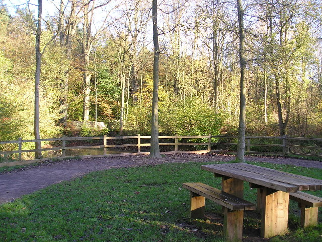 Salcey Forest - geograph.org.uk - 88201