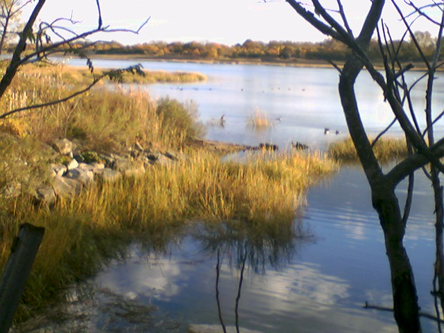 Wetlands Of The United States Wikipedia