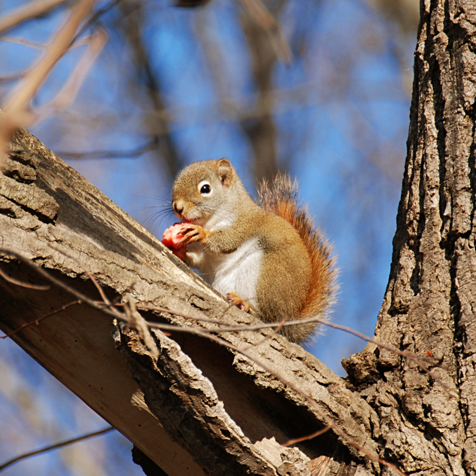 Small Squirrel Standing on Green Branch | Photo and Desktop Wallpaper