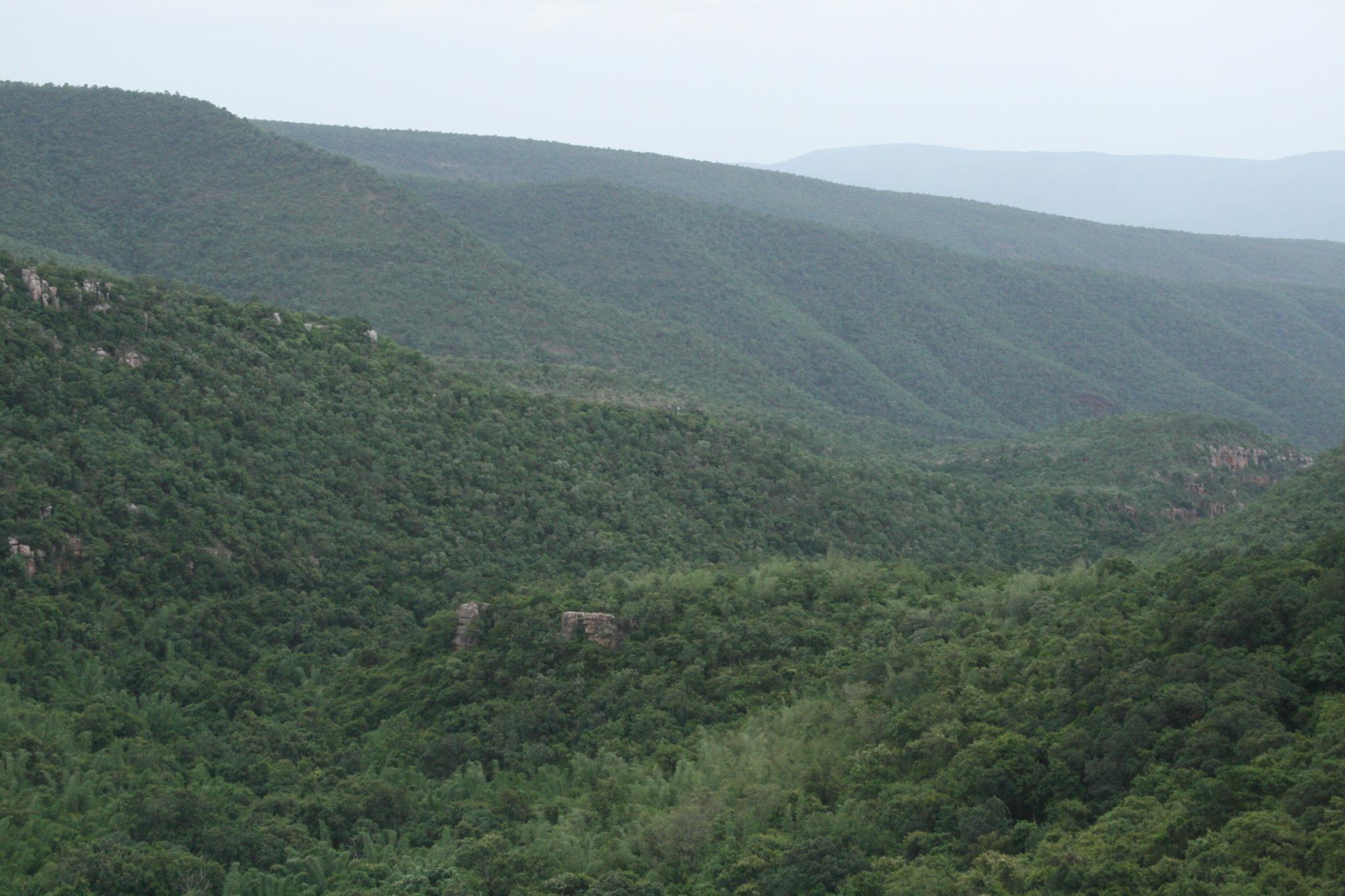 श्री वेंकटेश्वर राष्ट्रीय उद्यान
