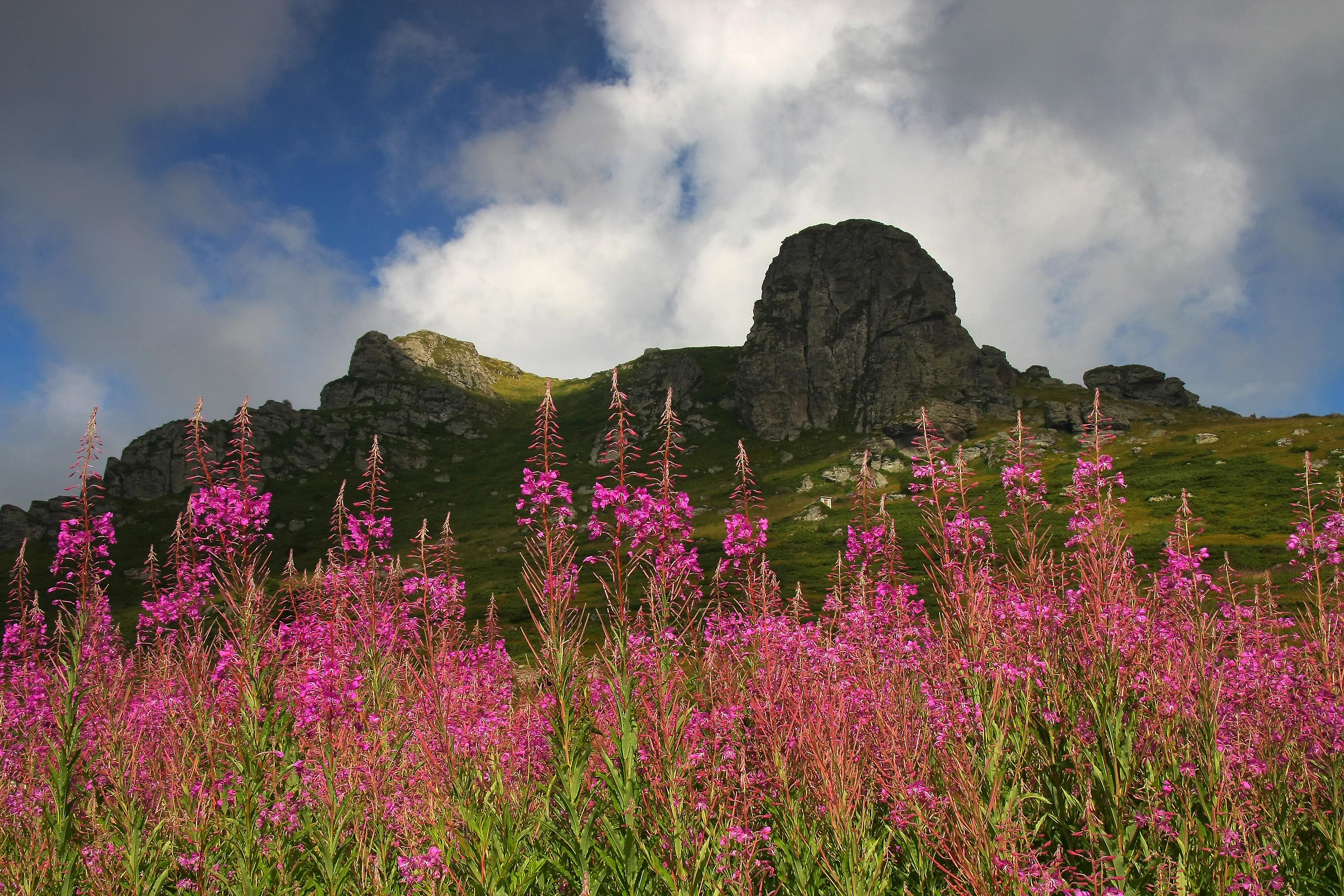 Стара планина — Википедија, слободна енциклопедија