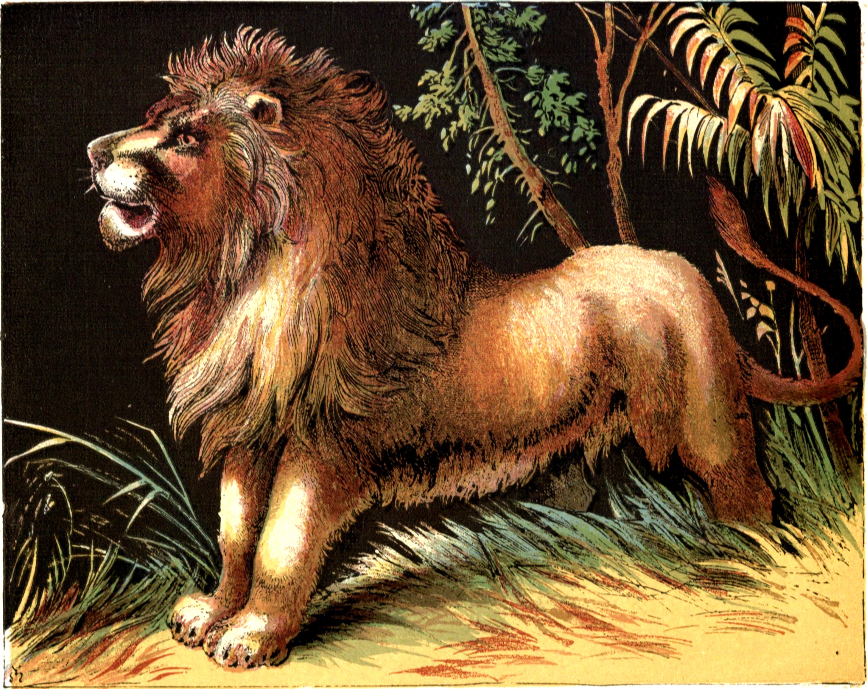 Story Library Lion The Lion And Other Stories