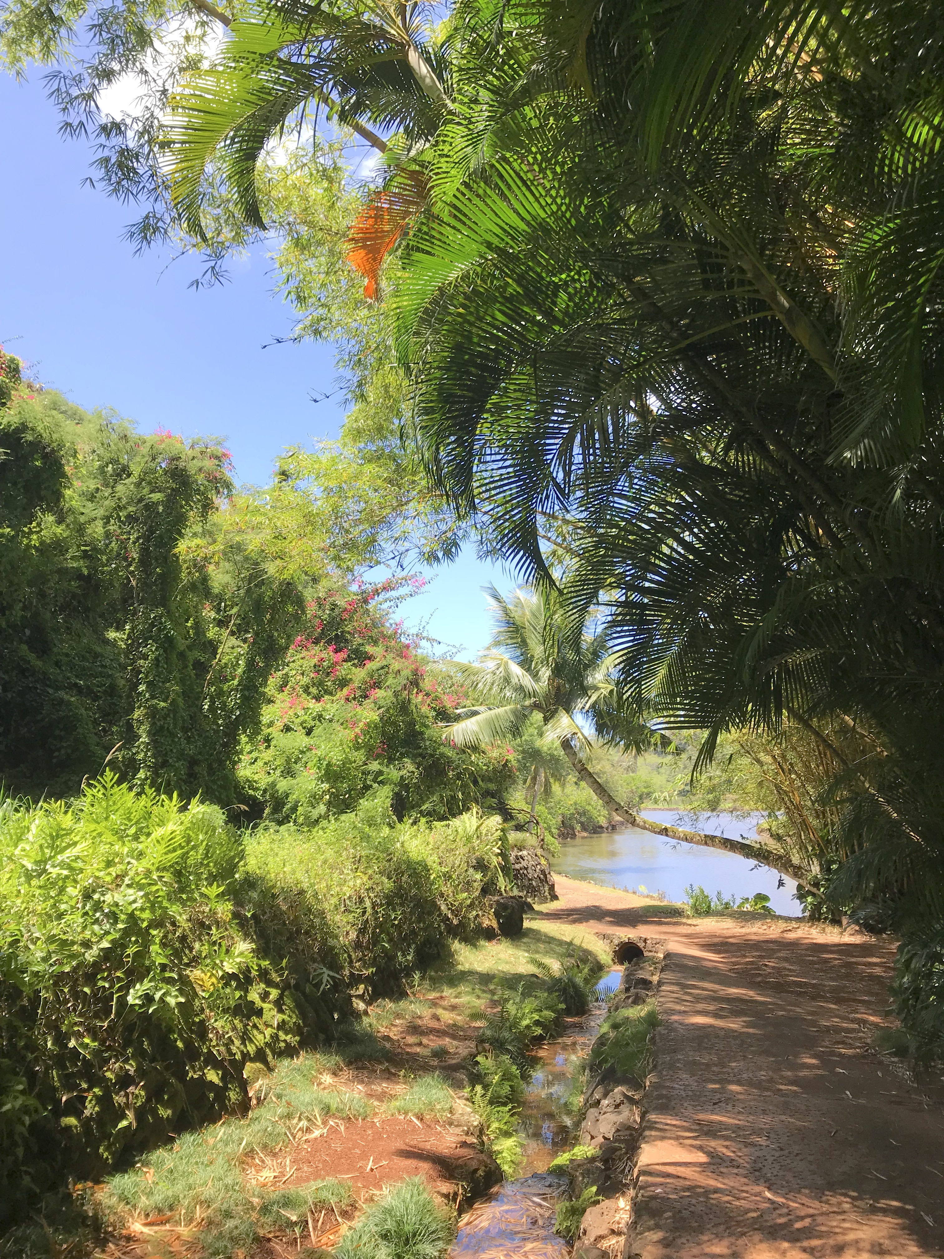 File walking path and stream in national tropical - National tropical botanical garden ...