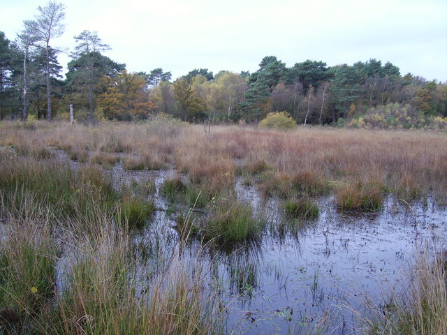 File:Wildmoor Heath - geograph.org.uk - 646719.jpg
