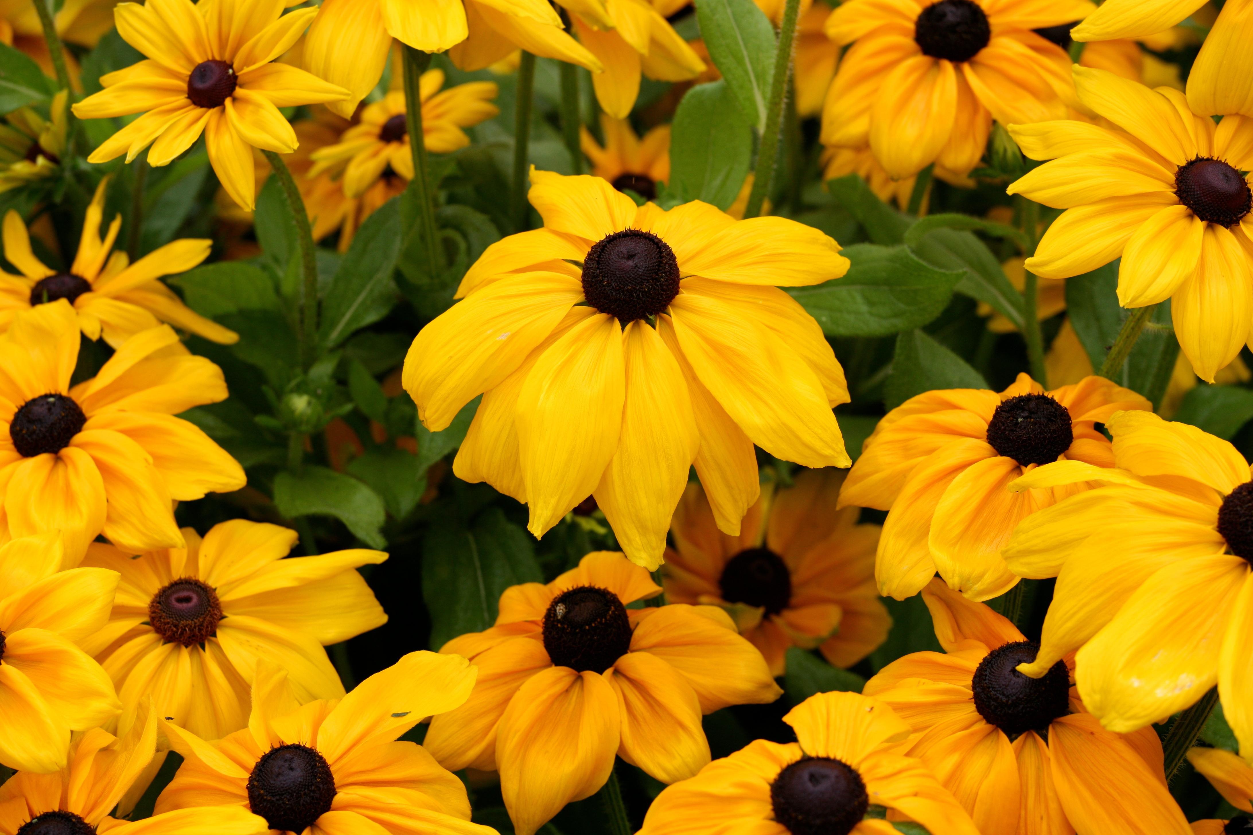 File:Yellow Flowers (5982179610).jpg - Wikimedia Commons