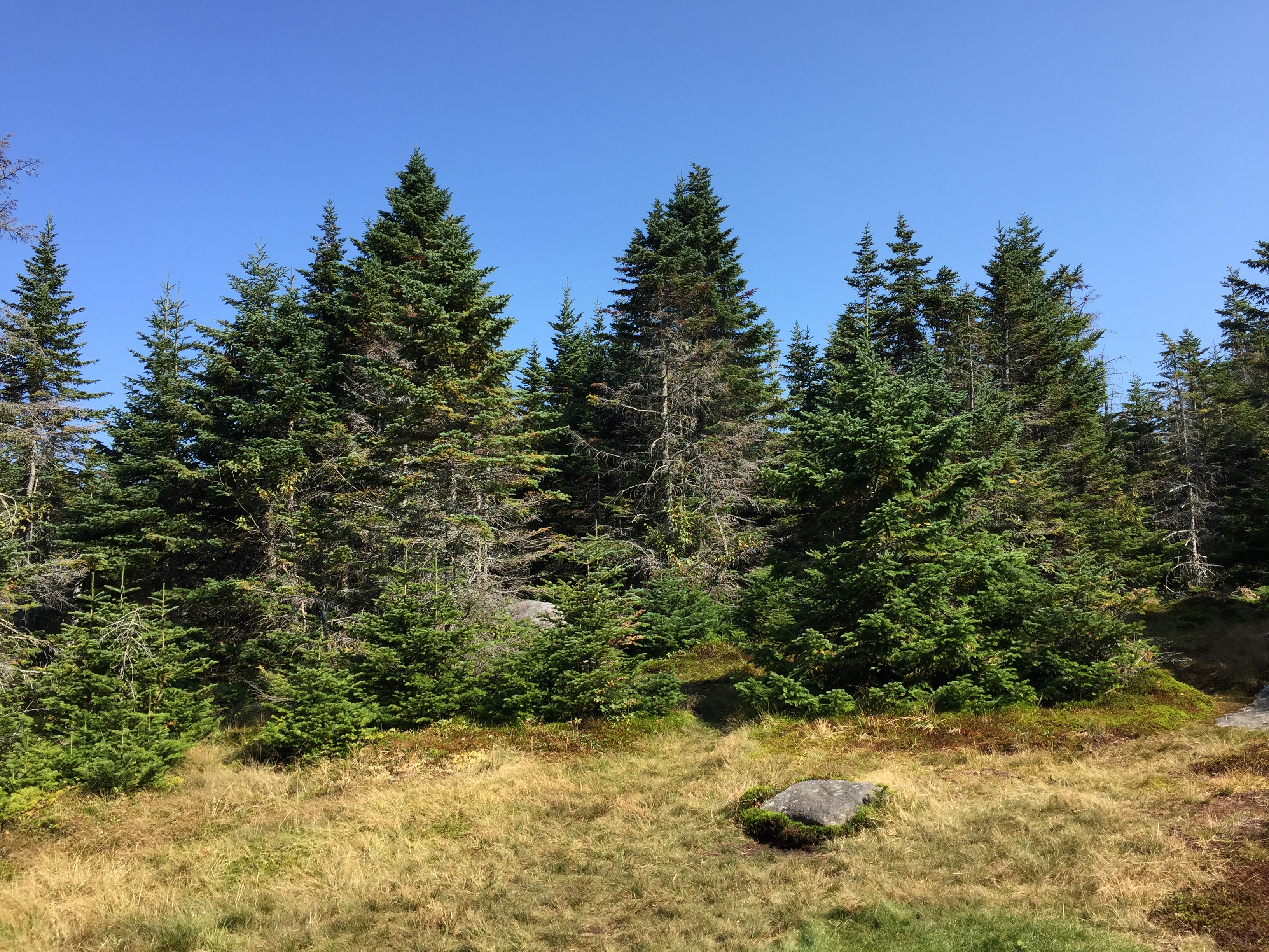 New york essex county keene - File 2016 09 04 10 46 15 Forest Along The Van Hoevenberg Trail