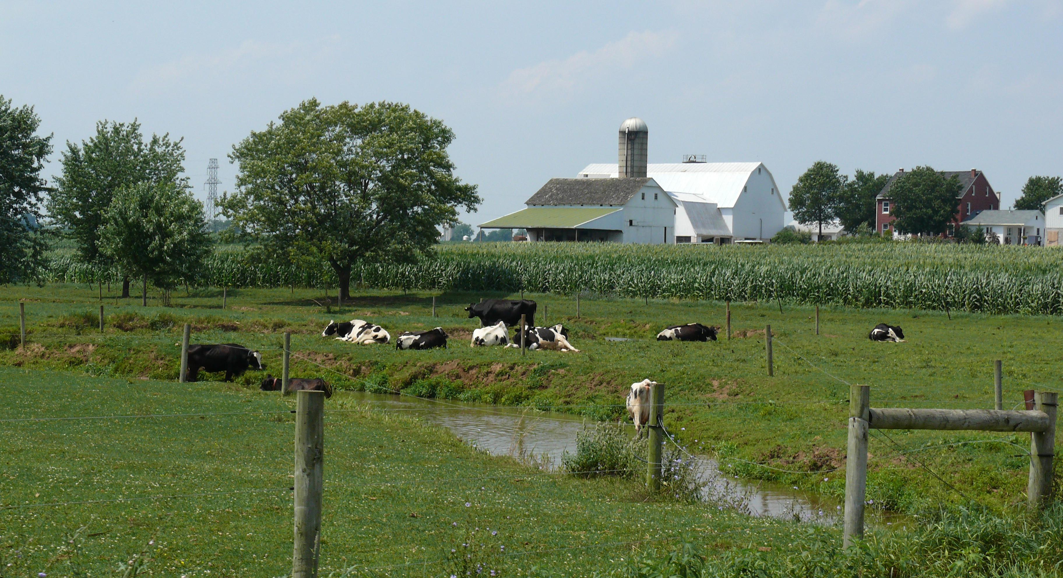 File:Amish dairy farm 5.jpg - Wikimedia Commons