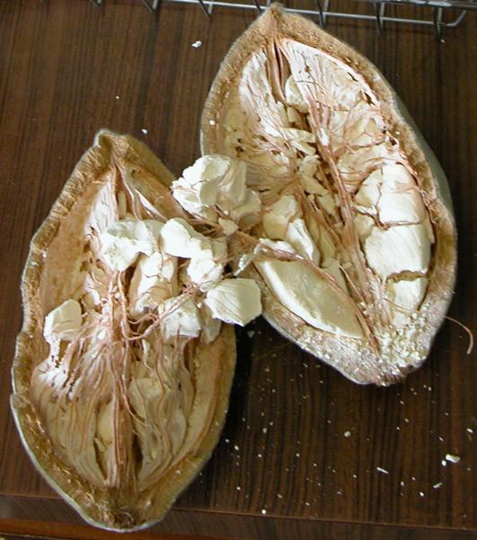 Baobab Frucht.jpg