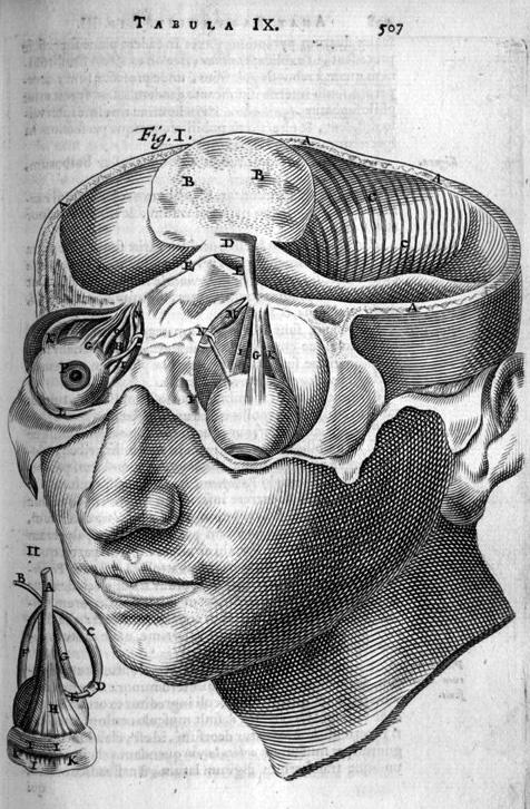 bartholin-head-transect