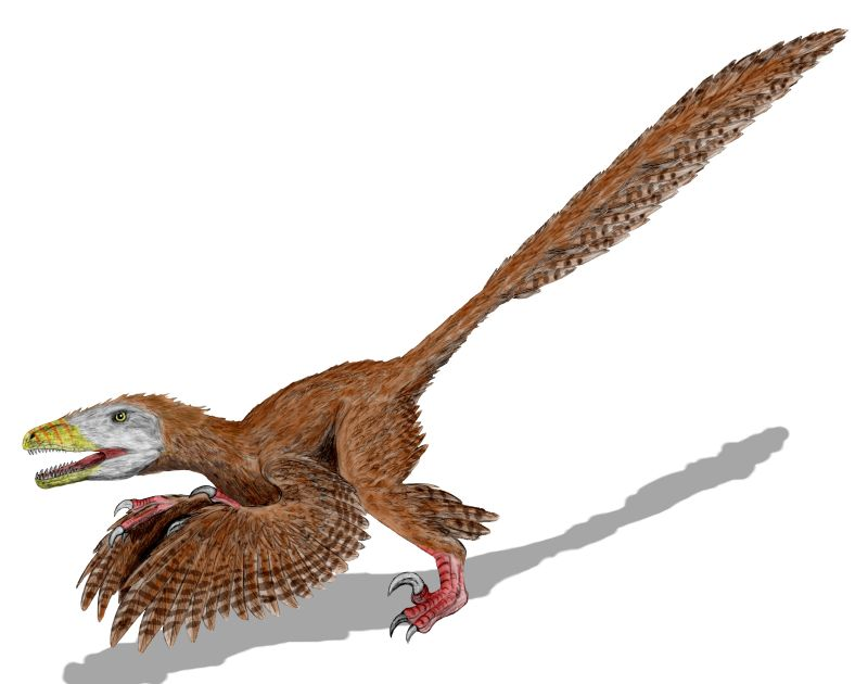 http://upload.wikimedia.org/wikipedia/commons/1/1f/Deinonychus_BW.jpg
