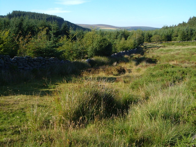 Edge of Bellever Forest - geograph.org.uk - 208167