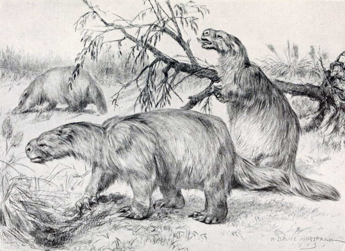 Extm_Glossotherium_robustum_rbh-hlmwh019