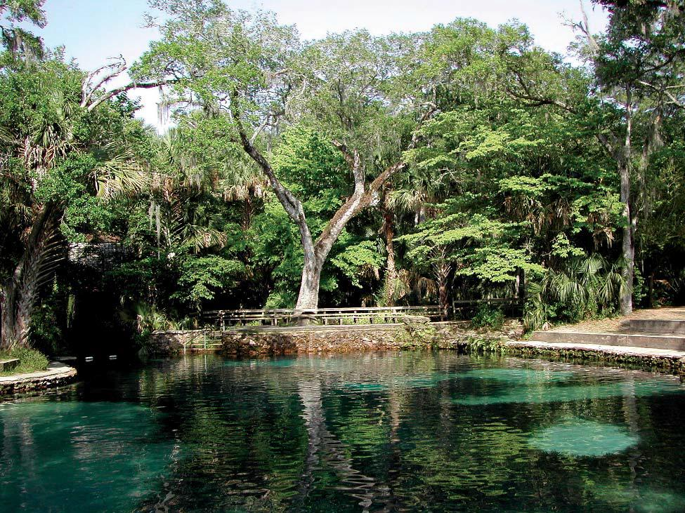 The Most Beautiful Natural Springs Near Orlando