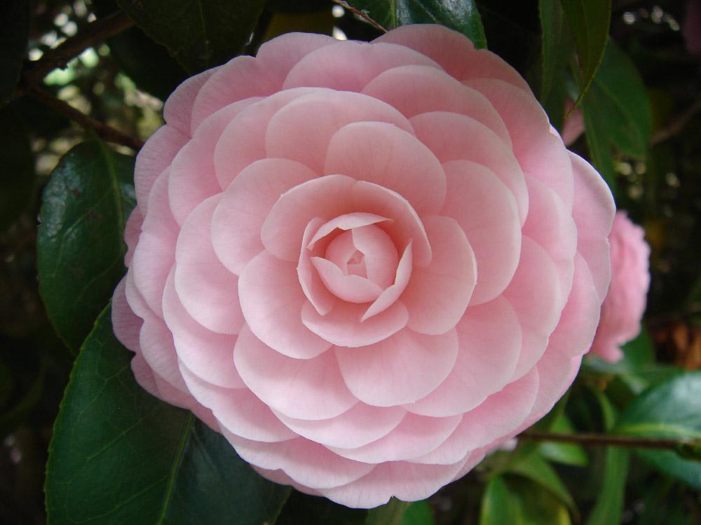 flowers of japan inspiration interior designs