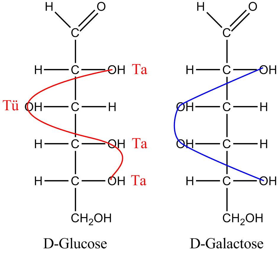 D Galactose File:GlucoseGalactose....