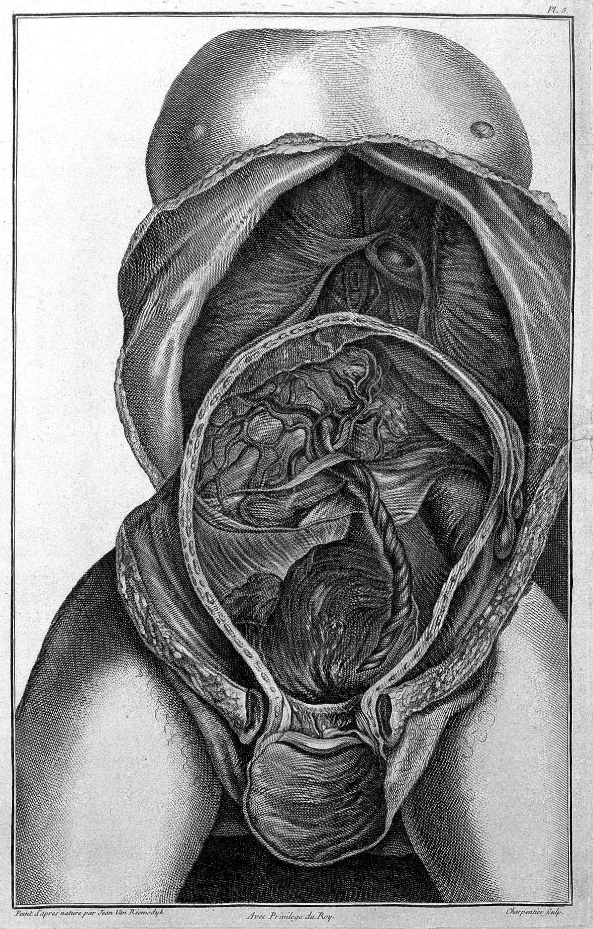 File:Jenty; anatomy of the womb and foetus Wellcome L0030023.jpg ...