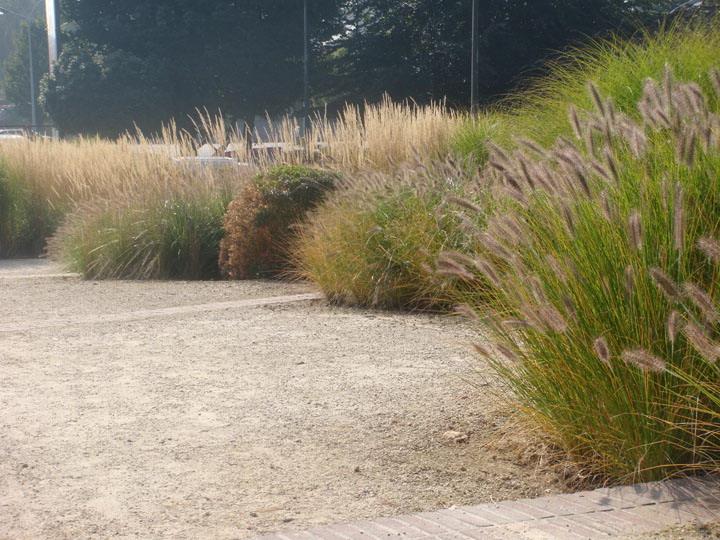 File:Laeken 08066 Foyer-Laekenois-escalier-jardin-Pennisetum-043.jpg ...