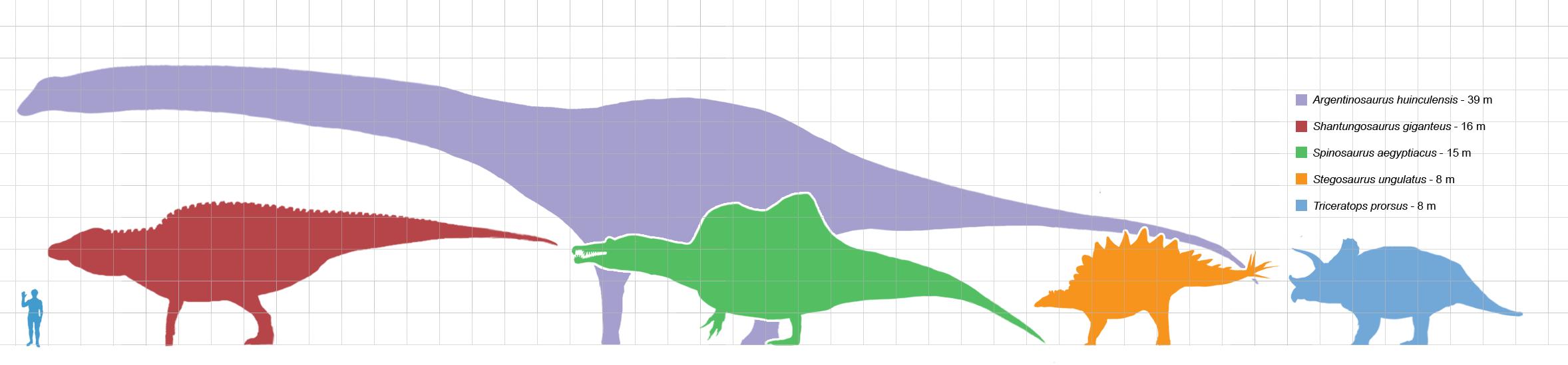 [Image: Largestdinosaursbysuborder_scale.png]
