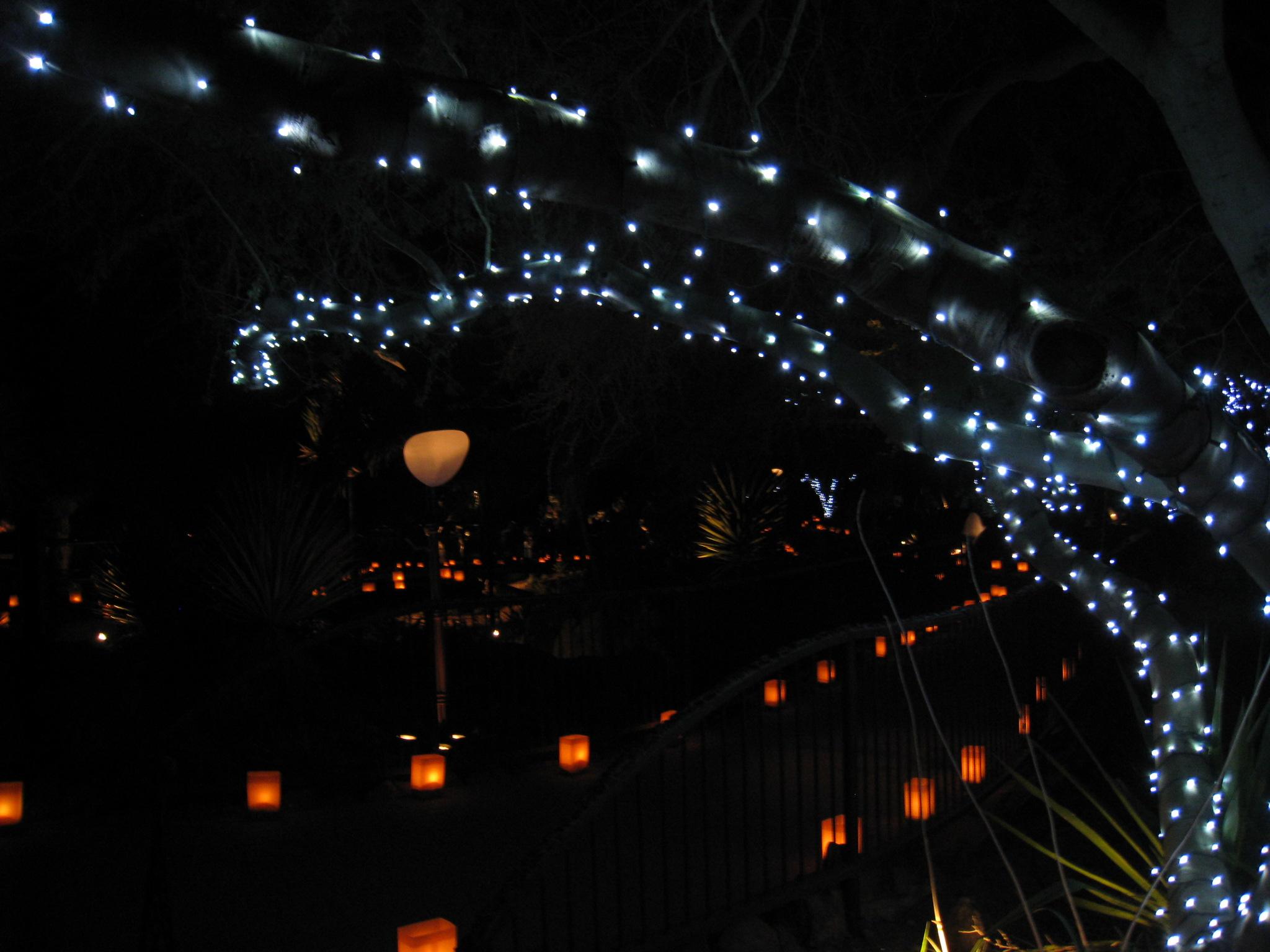 Las Noches de las Luminarias, DBG Phx.jpg