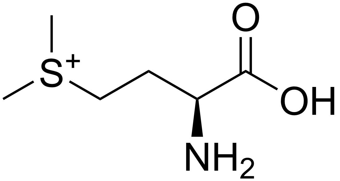 s-methyl n- (methylcarbamoyl)oxy thioacetimidate