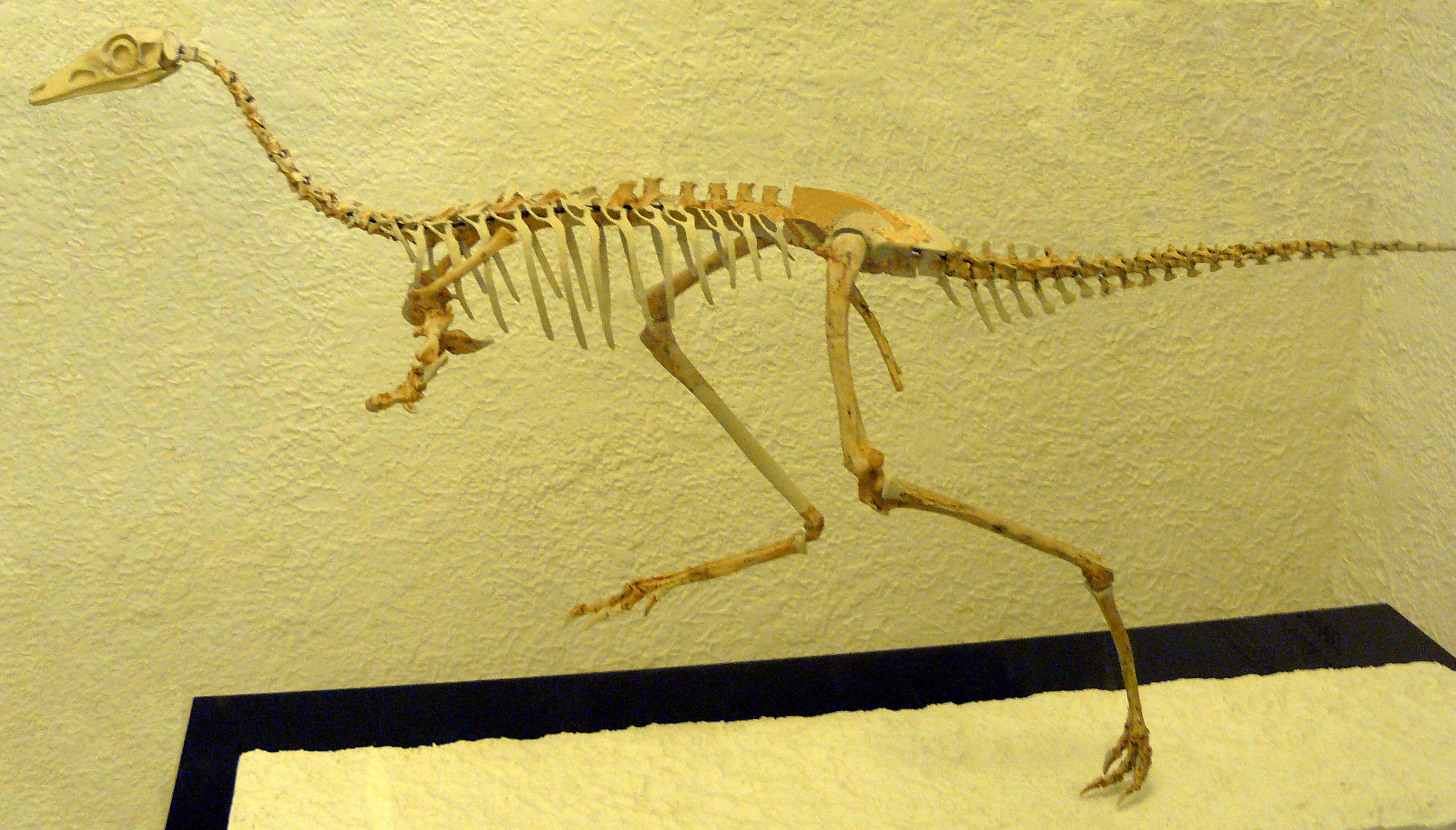 filemononykus skeleton fixjpg