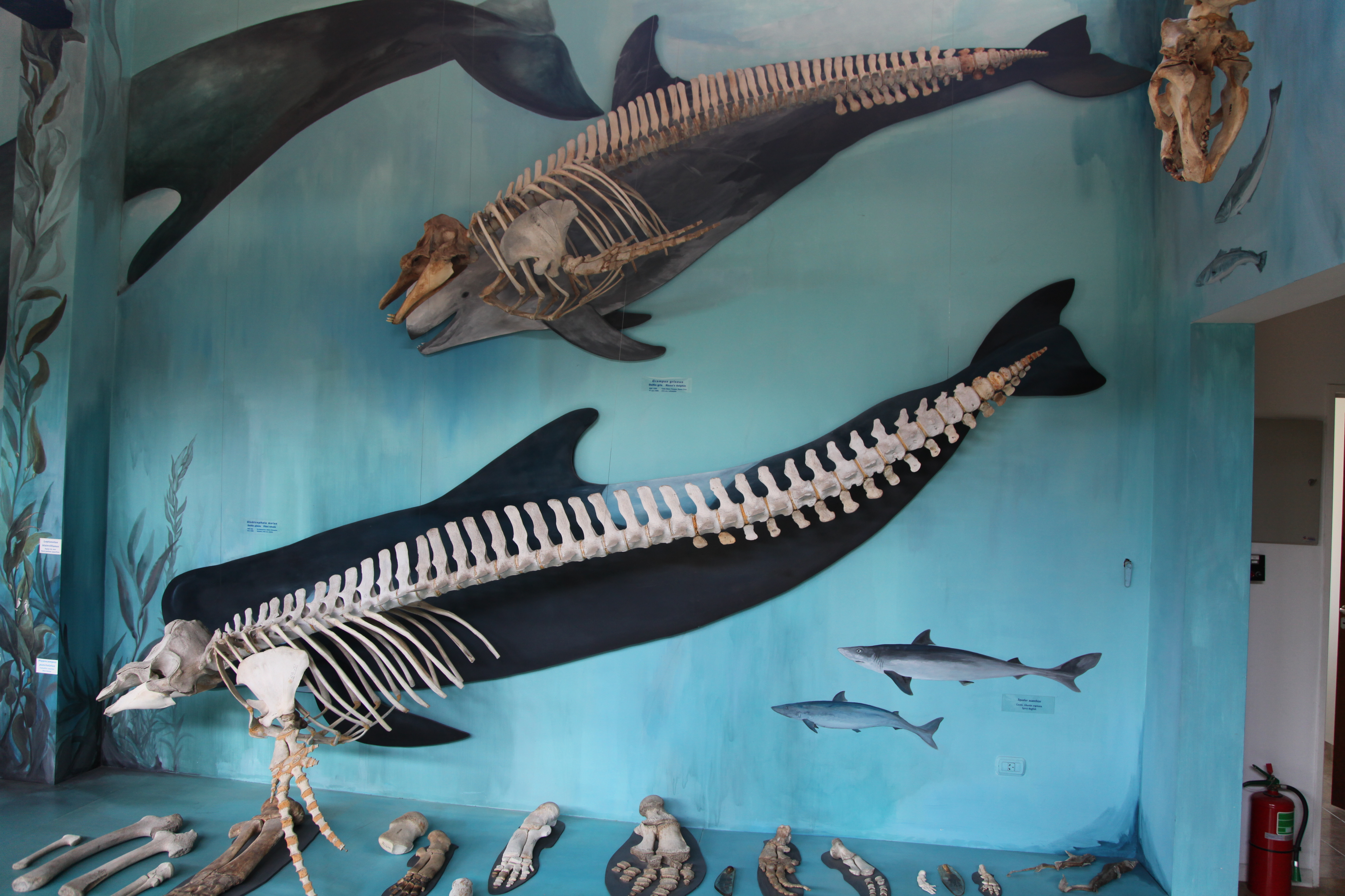 File:Museo Acatushún de Aves y Mamíferos Marinos Australes (5541472015).jpg
