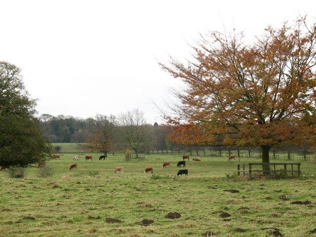 Newton Hall Park - geograph.org.uk - 618036